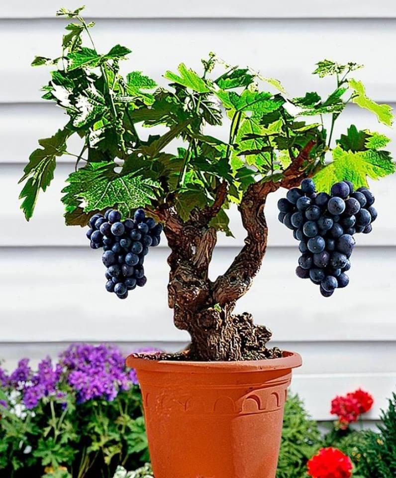 Awesome Bonsai Fruit