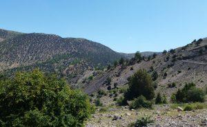 جنگل اسپیرو دامغان